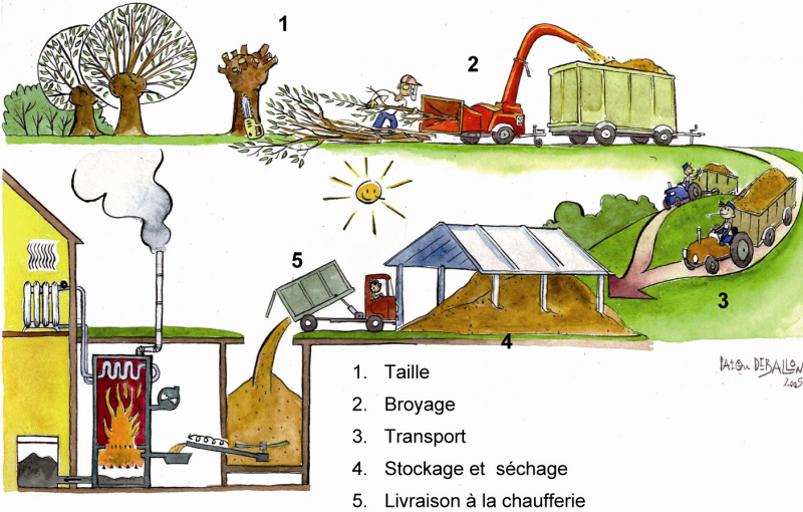 Schéma production de plaquettes