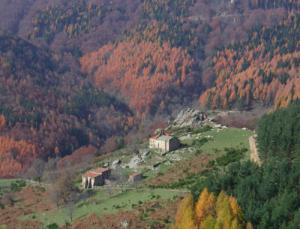 Chapelle Sant Guillem et diversité forestière